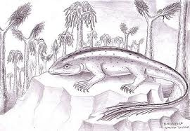 (14) 350 millones de años (aC) - El primer animal anfibio pisa la tierra firme y se le denomina Ichtiostega. Es el resultado de millones de años de evolución en que los peces transforman sus branquias, en una especie de pulmones y sus aletas se convierten en patas.