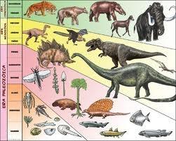 (15) 250 millones de años (aC) - En 100 millones de años se produce una lenta evolución de algunas especies y por otro lado, la selección natural hace desaparecer a las que no se adaptaron a las nuevas condiciones cambiantes. Reptiles de enormes dimensiones se extienden por toda la tierra: Herrerasaurio, Eoraptor, Stegosaurio, Alosaurio, Brontosauro, Branquiosauro, Pteranodonte, Tyranosaurio, etc., son terribles animales que dominan la tierra.