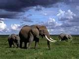 20 - El Homo Erectus de esta época, en Europa, caza elefantes poniéndole trampas. La caza mayor sé a generalizado en el mundo.