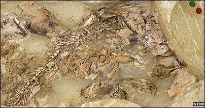 Fósiles de placodermo con embrión