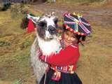 """41 – (1534) La primera mestiza... Hemos preparado un gran banquete por el nacimiento de la primera hija de Inés  Huaylas, se llamará como su padre, Francisca Pizarro... (El conquistador que tiene 56 años, esta feliz, llama a su joven esposa """"Pispita"""" que quiere decir la siempre alegre, la vivaracha, la simpática)."""