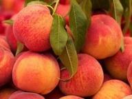 11 DURAZNOS - Frutas y verduras amarillo-naranja  Fitoquímicos: beta-caroteno, quercitina, luteína, zeaxantina, limoneno.  Se encuentran en zanahoria, papaya, melón, pimiento amarillo, maíz, naranja, melocotón, limón amarillo, mandarinas, toronja, piña, papas, mango, durazno.  Beneficios  Disminuye los niveles de colesterol, protegen contra el cáncer y enfermedades del corazón.  Ayuda al sistema inmunológico, reduce el riesgo de catarata y degeneración macular del ojo.