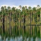 60 RESERVA NATURAL DE TAMBOPATA - ORILLAS DEL RIO